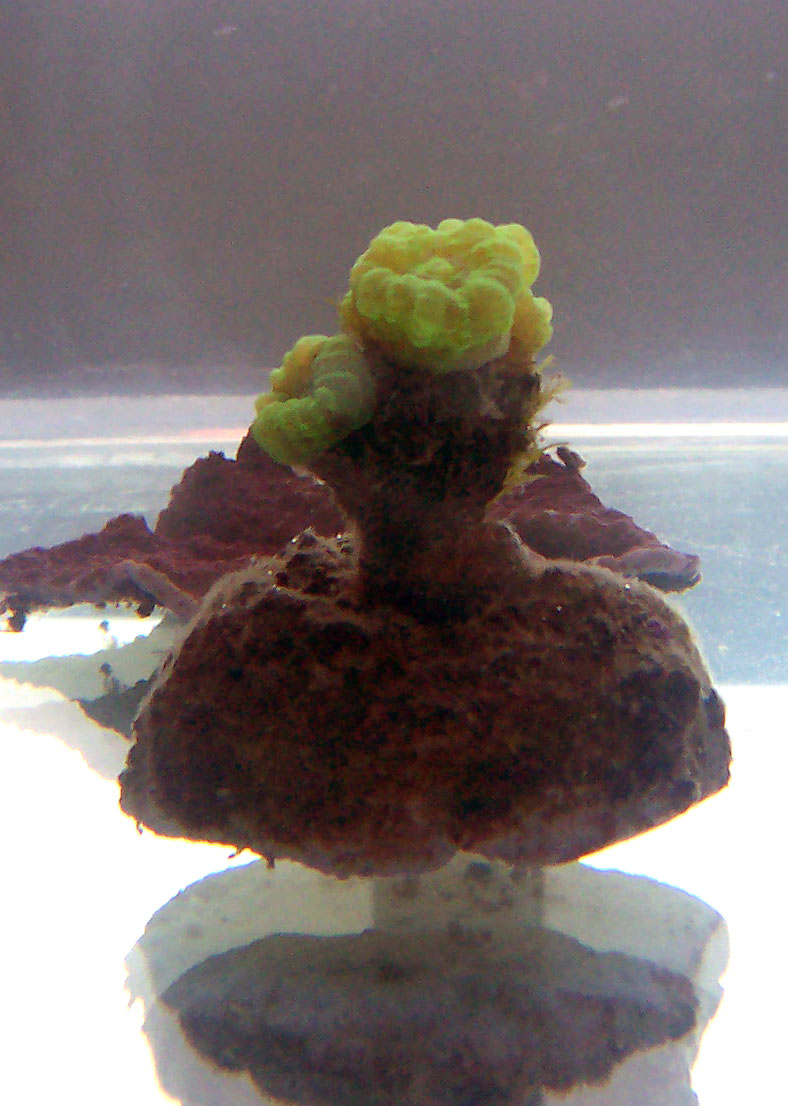 identifications coraux 100_8314