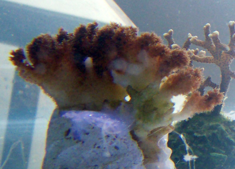identifications coraux 100_8319
