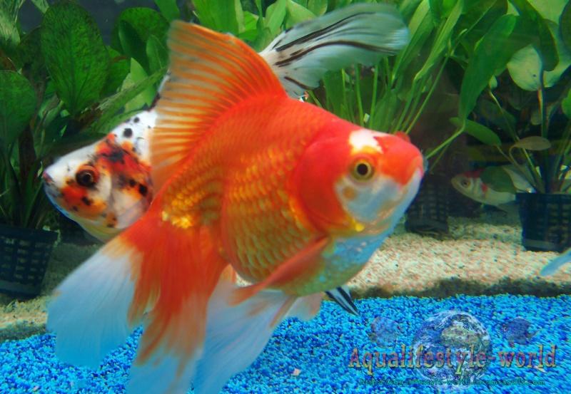 Photo de poisson d'eau froide 100_9323