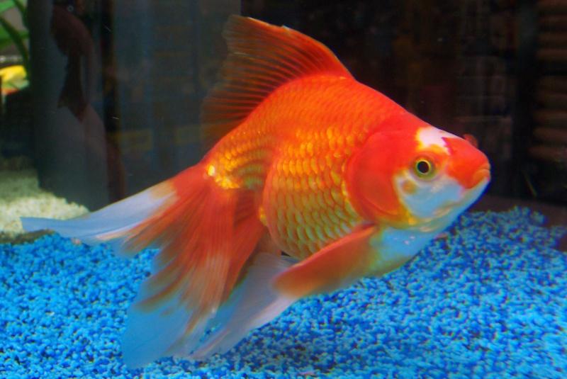 Photo de poisson d'eau froide 100_9324