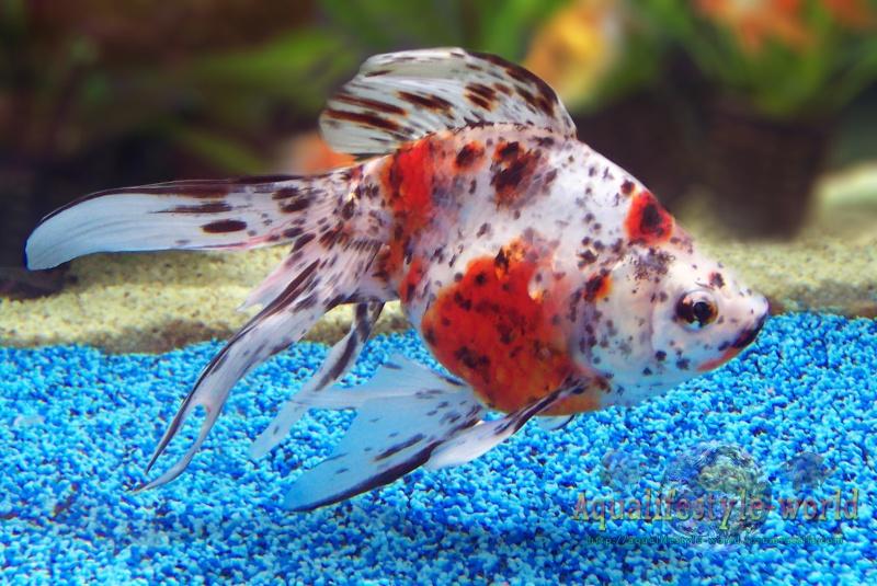Photo de poisson d'eau froide 100_9325