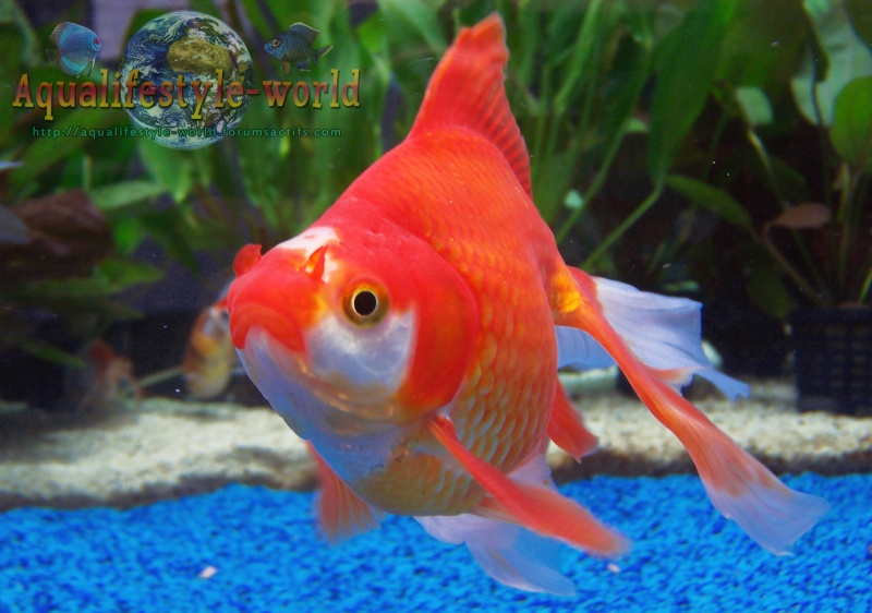 Photo de poisson d'eau froide 100_9326
