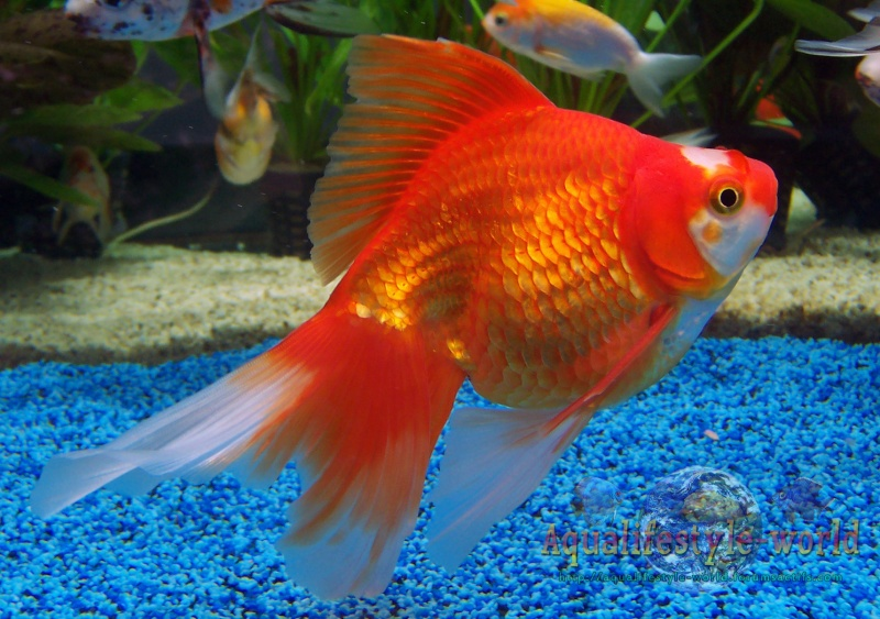 Photo de poisson d'eau froide 100_9327