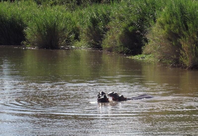 Rivière Ruzizi ( RD Congo) Foret210