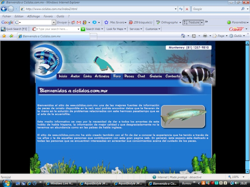 The forum of aquarists of Mexico fascinated by the African cichlid - foro-ciclidos Inscri10