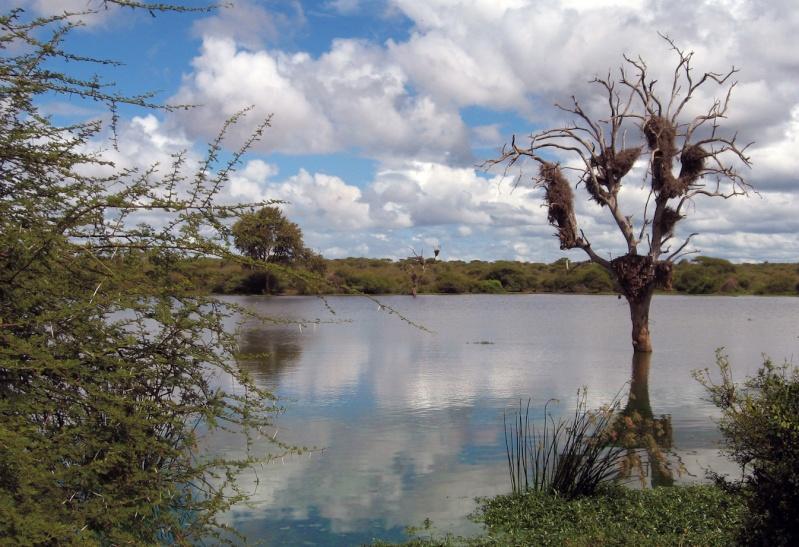 Rivière Ruzizi ( RD Congo) L_eau10