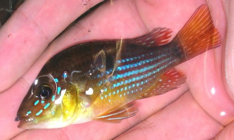 pêche en uraguay Peces110