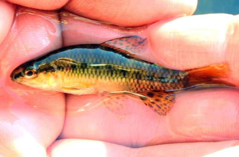 pêche en uraguay Peces410