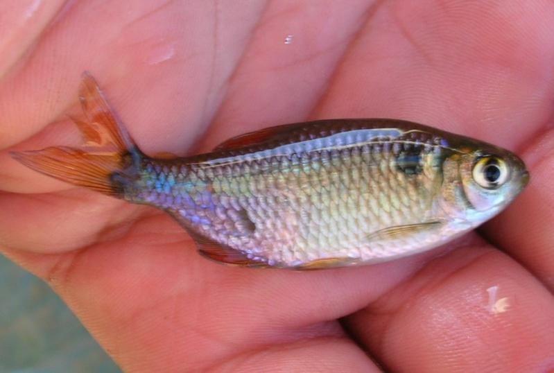 pêche en uraguay Peces610