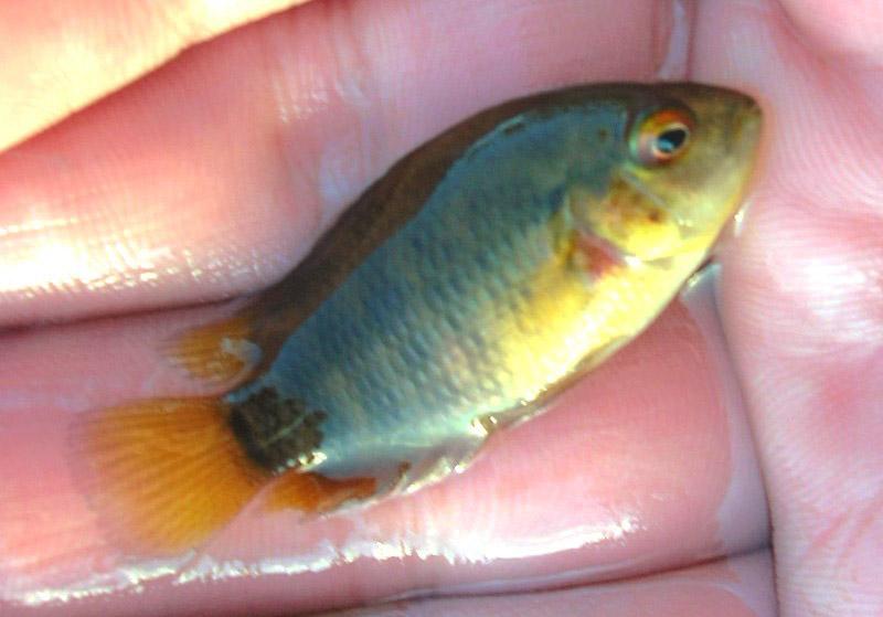 pêche en uraguay Peces810