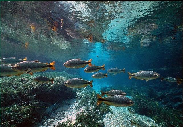 Le fleuve Rio Sucuri Succur10