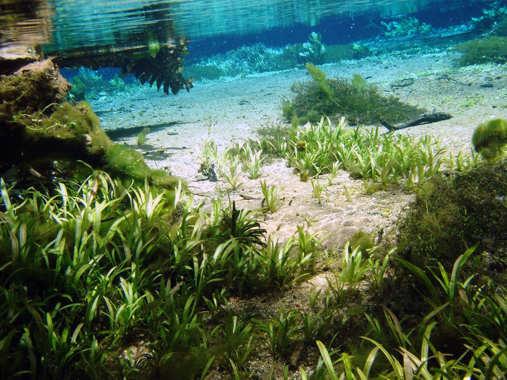 Le fleuve Rio Sucuri Sucuri10
