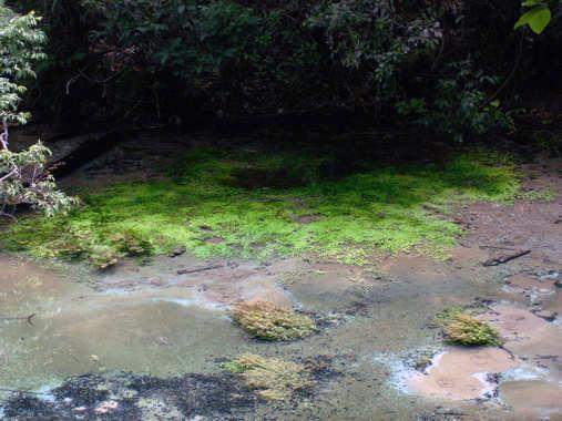 Le fleuve Rio Sucuri Sucuri12