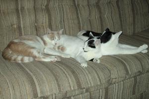 The Three Amigos 3cats411