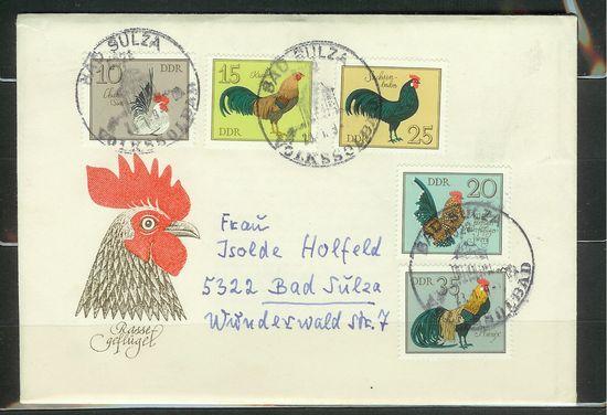 Enten, Gänse, Hühner, Puten und Fasane Geflug10