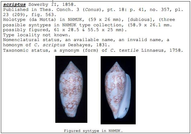 Conus (Cylinder) archiepiscopus loman   Dautzenberg, 1937 Script10
