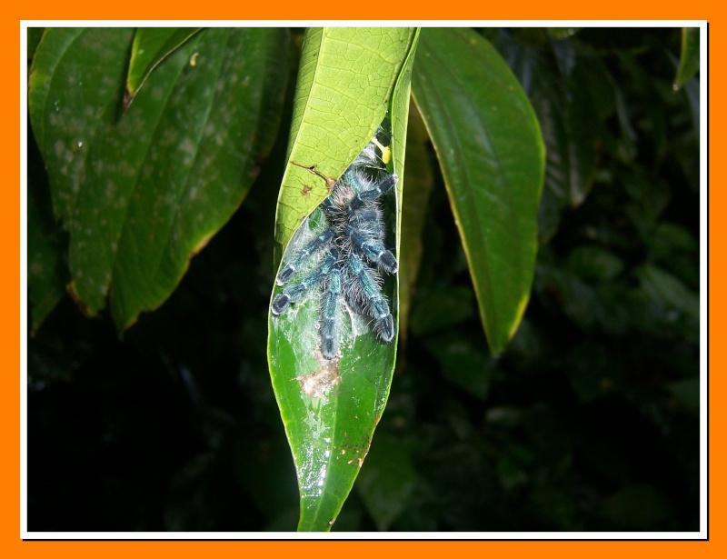 Insectes de la Martinique 16 100_7310