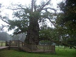 Forêt de Brocéliande Chene_10