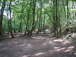Forêt de Brocéliande Foret_10