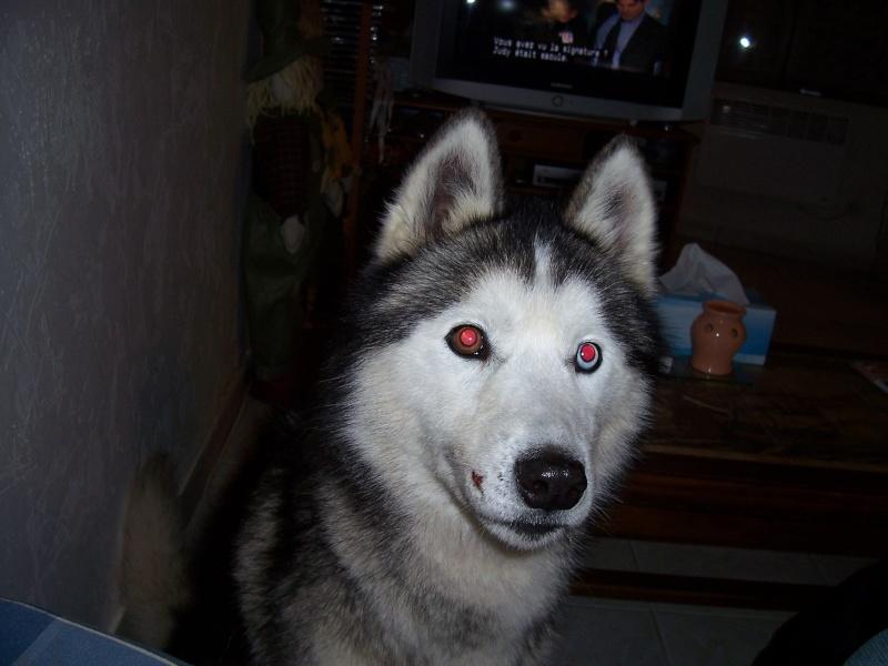 NOEMIE - femelle husky 11 ans - SPPA 80 DECEDEE - Page 5 006_310