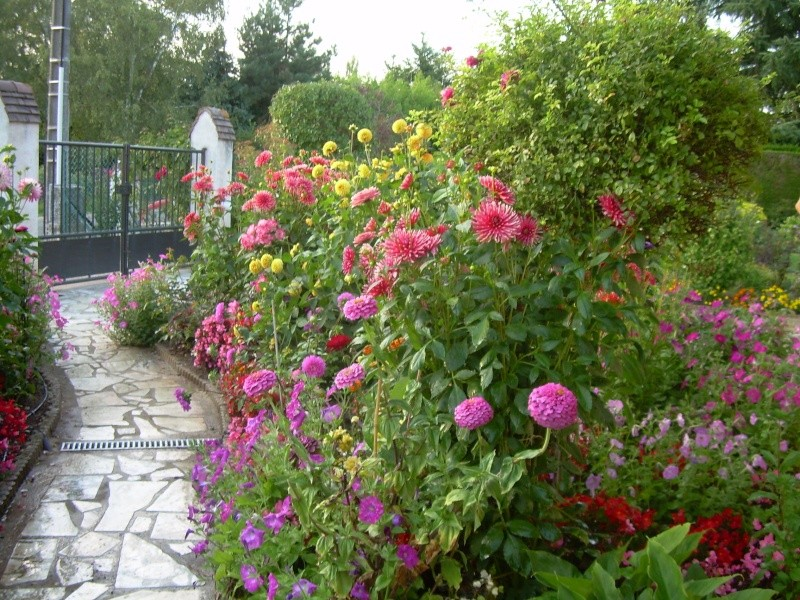 mon jardin Dscn1310