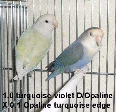"""des petits """"Opaline edge"""" ? 3_23_010"""