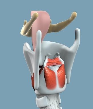Анатомия на човека! Anatom10