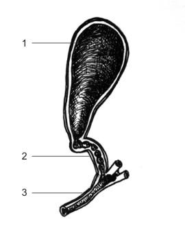 Анатомия на човека! Gall_b10