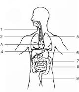 Анатомия на човека! Intern11