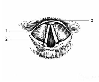 Анатомия на човека! Larynx10
