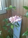 Какви цветя имате? Cvete310