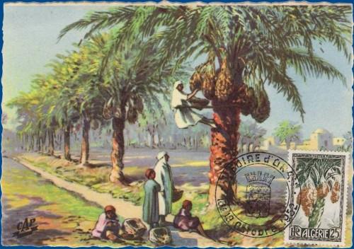 cartes postales d'algerie 1950_212