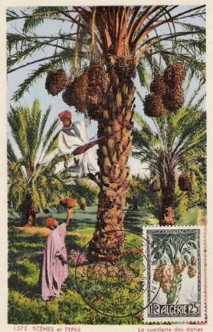 cartes postales d'algerie 1950_213