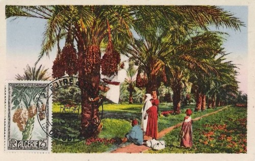 cartes postales d'algerie 1950_214