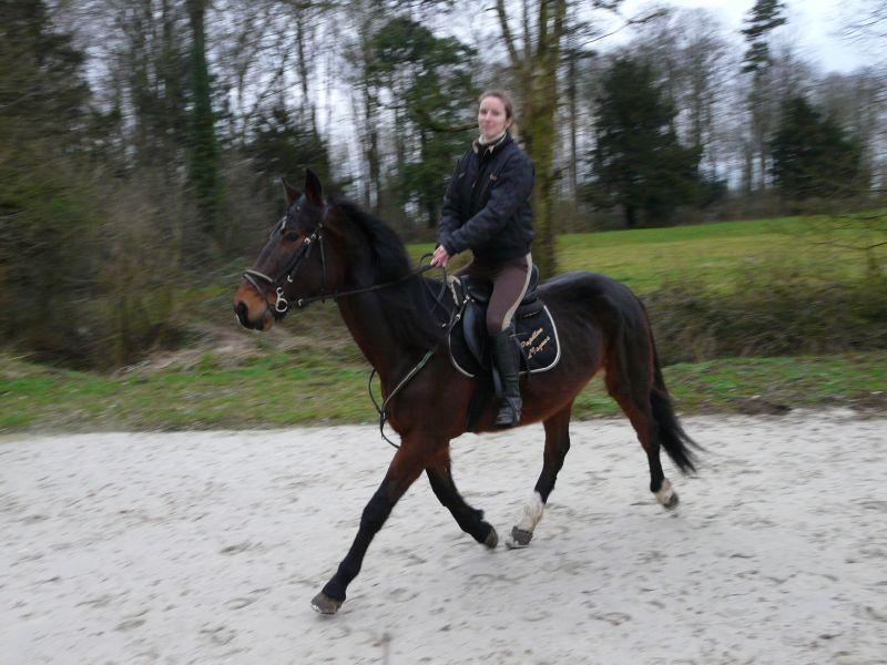 Probleme avec les photos sport équitation P1000210
