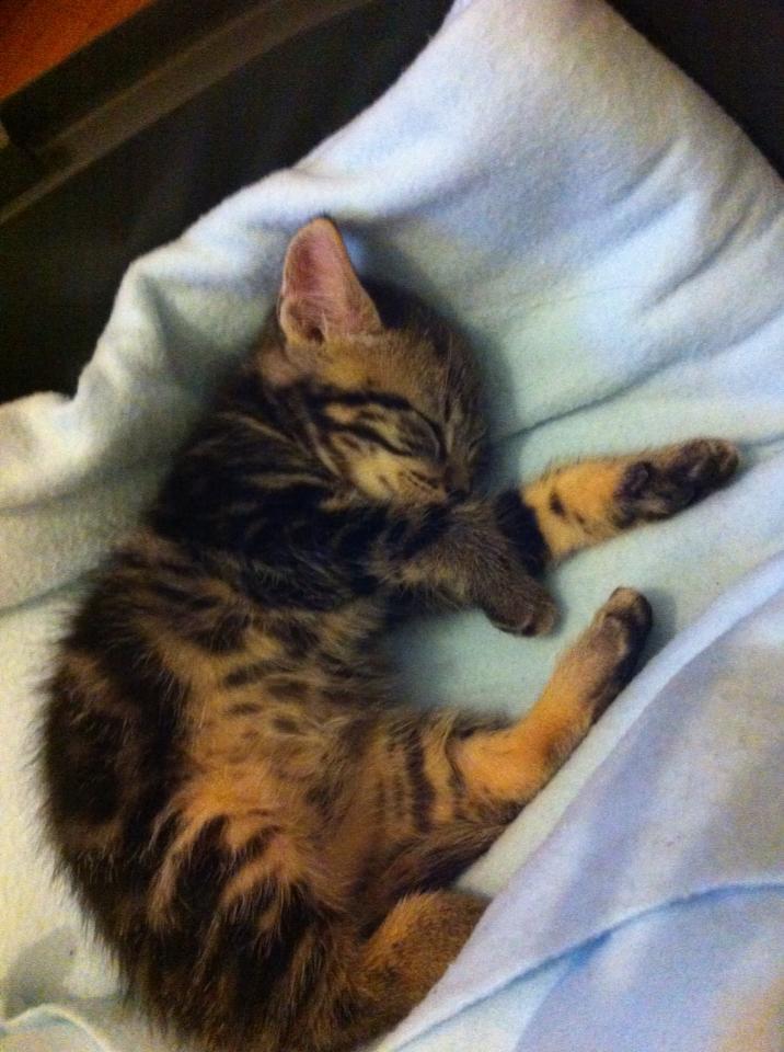Moi c'est Hello kitty! 25514810