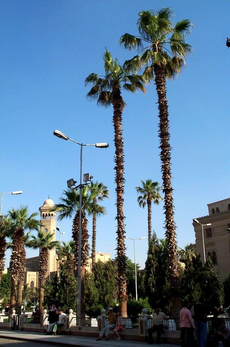 Mosquée Sayyidna Al-Hussein Le Caire Egypte Caire410
