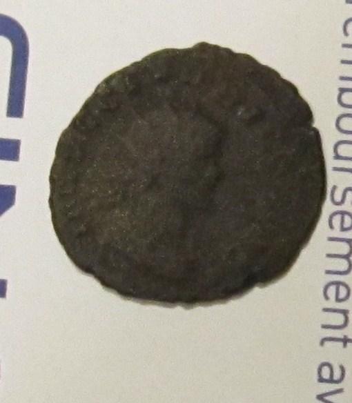 romaine en billon Img_0210