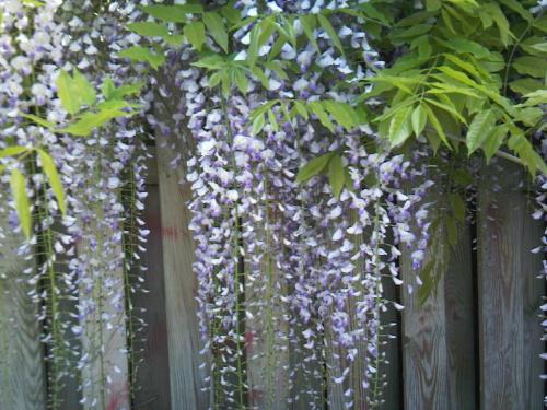 Сад , цветник... Photo-23