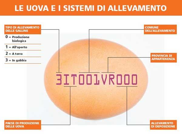 Raccolta di materiale interessante Uovo10
