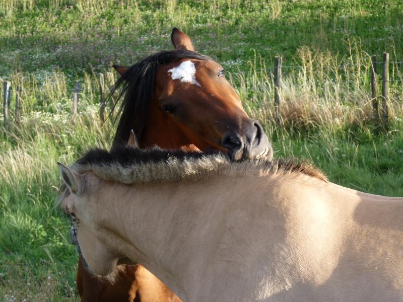Nom d'un petit poney...  P1020211