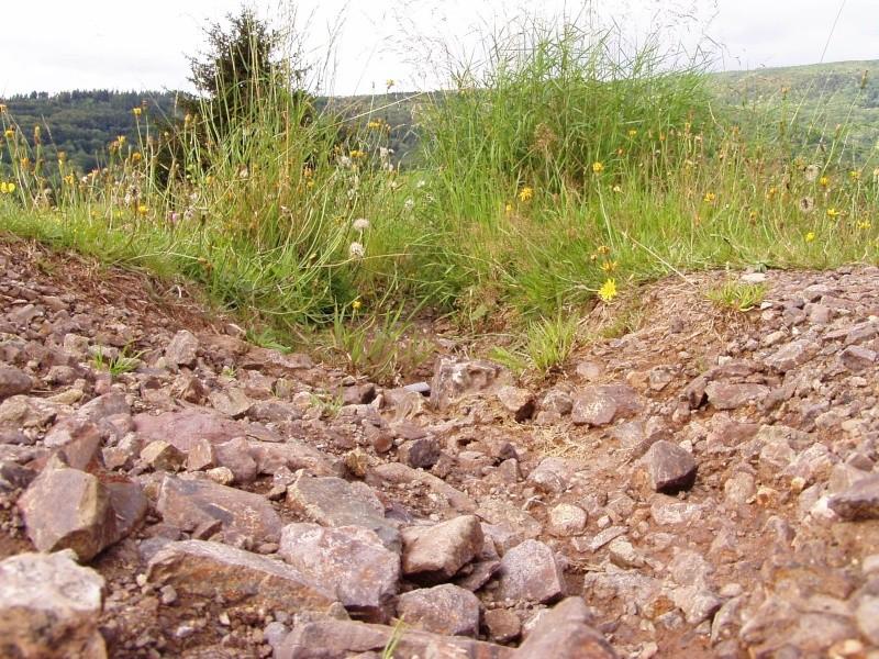 [67 - Alsace] Le Col de Steige Chemin11