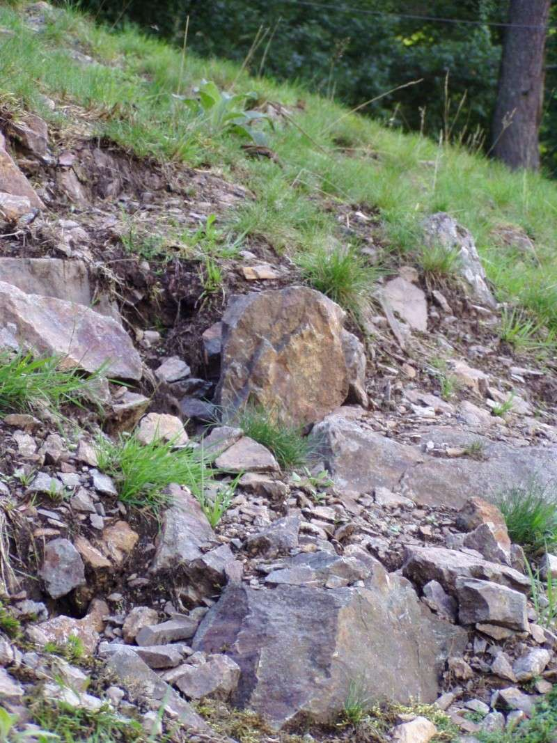 [67 - Alsace] Le Col de Steige Spot_d10
