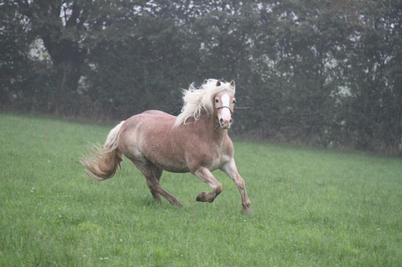 Formule pour calculer le poids d'un petit cheval Img_9211