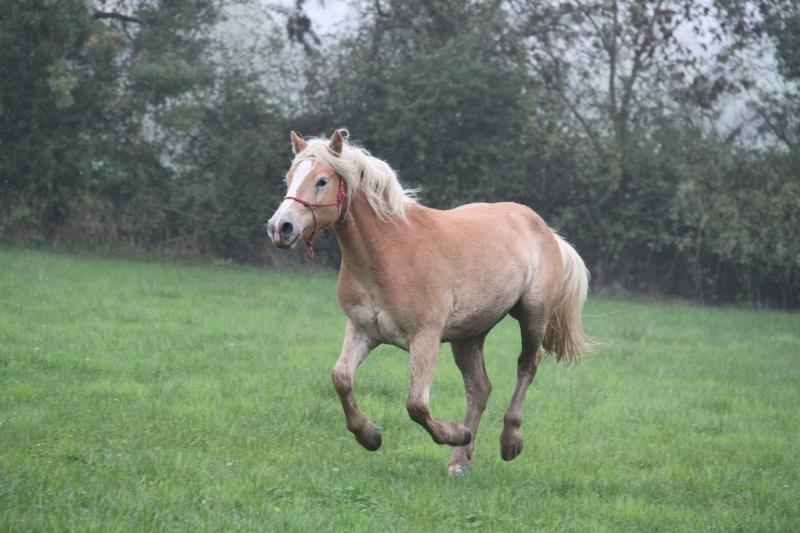 Formule pour calculer le poids d'un petit cheval Img_9310