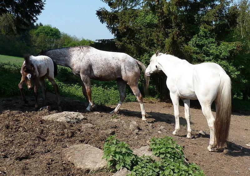 Nad Casper et Amber....Nouvelles photos ! - Page 3 P1020210