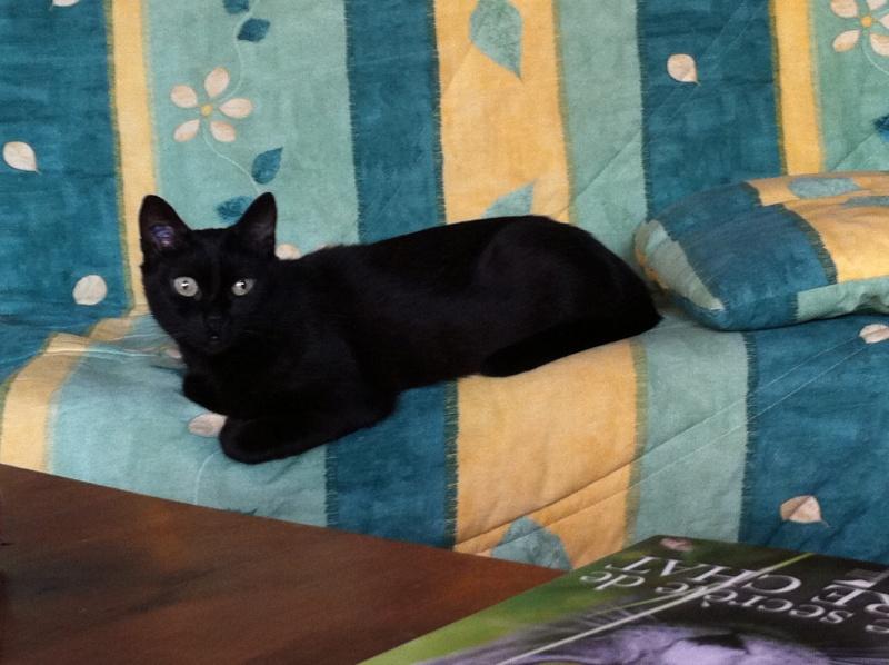 Lindy, 8 mois, notre petite puce, d'une grande douceur  Img_4210