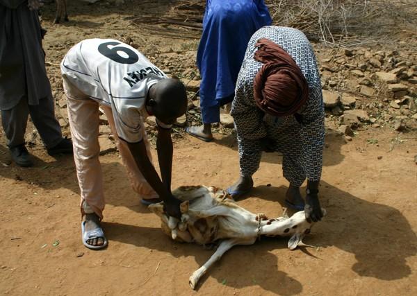Récit d'un voyage en Afrique à bord d'une 2CV 2006 009_ch10