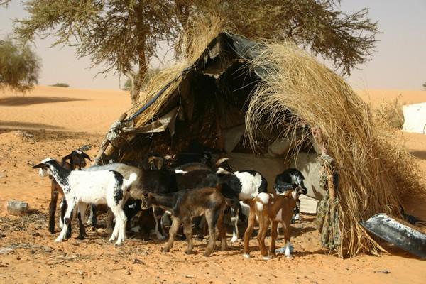 2006 Mauritanie en 4x4 bimoteur 2cv_bi38