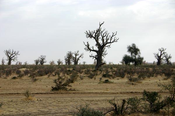 Récit d'un voyage en Afrique à bord d'une 2CV 2006 Imagen12